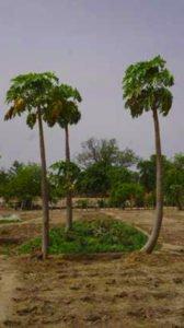 Dialaye garden